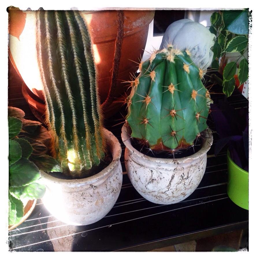 Ich wollt, ich wär' kein Kaktus – Szenen einer schlimmen Kindheit