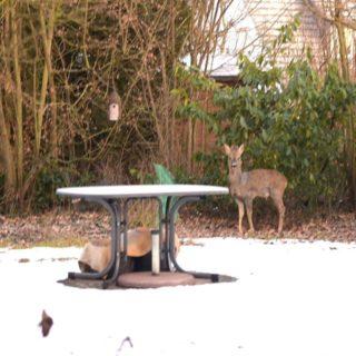 Gast im Garten. Schön – aber nicht willkommen.