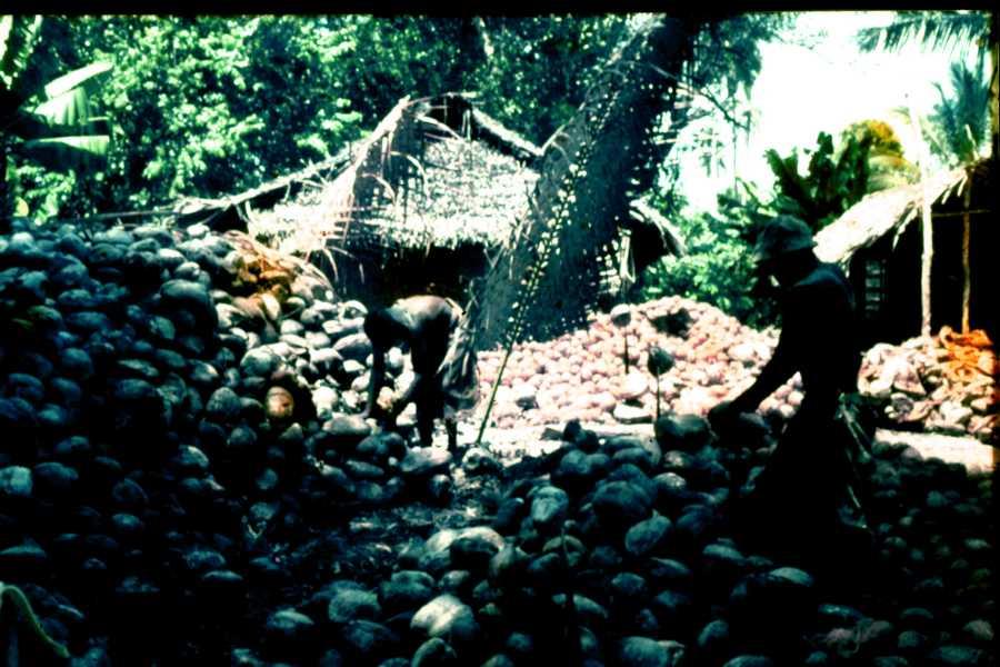 Kokosnussbearbeitung